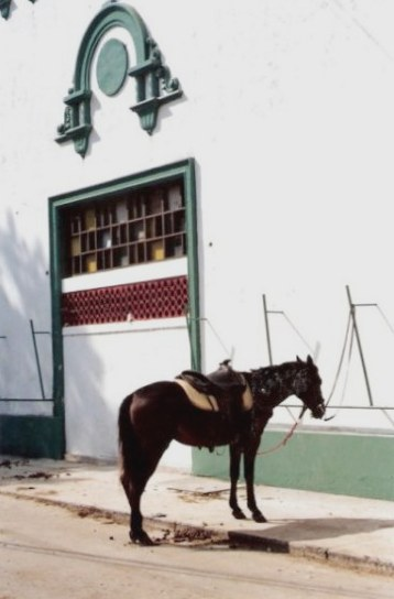 Tethered stock horse at Agricultural Fair - Havana